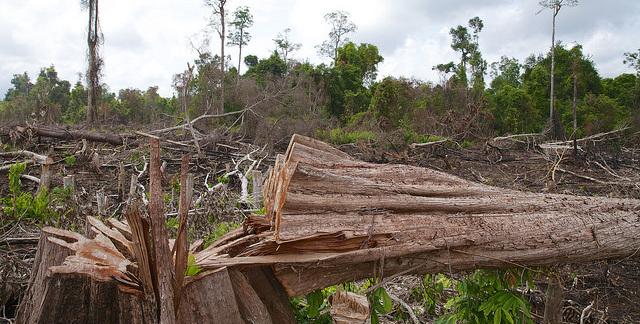 International co-operation to halt deforestation  