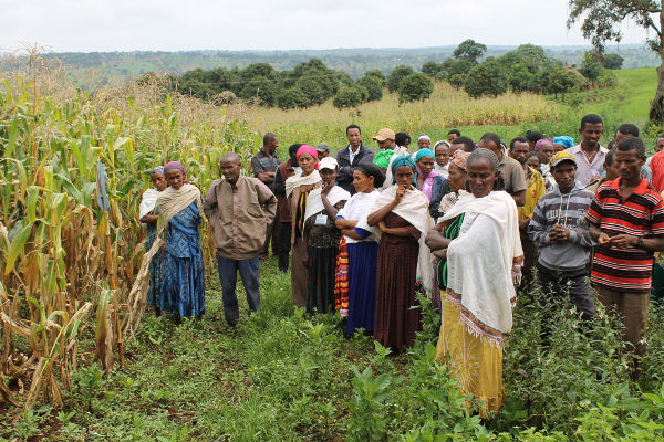 Average yields of maize per m³ water consumed in six partner countries |